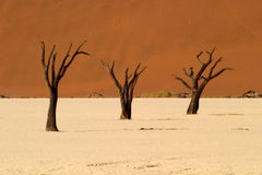 Dead vlei 6 Royalty Free Stock Photos