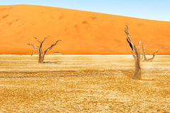 Dead Vlei near Sesriem in Namibia Stock Photography
