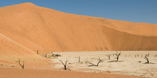Dead Vlei desert. Dead Vlei, desert valley with dead acacia trees, Namibia Stock Images