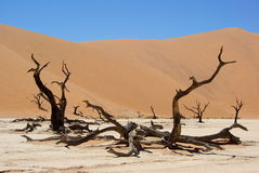 Dead Vlei - Desert in Namibia Royalty Free Stock Photo