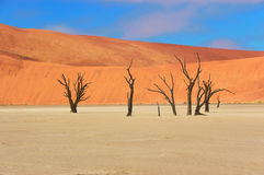 Dead Vlei desert, Namibia, South Africa Royalty Free Stock Image