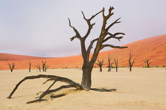 Dead Vlei desert, Namibia, South Africa Stock Photos