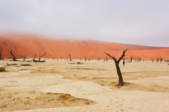 Dead Vlei desert, Namibia, South Africa Royalty Free Stock Images