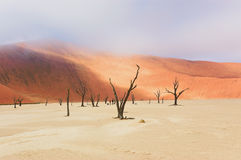 Dead Vlei desert, Namibia, South Africa Royalty Free Stock Photos