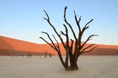 Dead Vlei in Namib desert. Namibia, Africa royalty free stock image