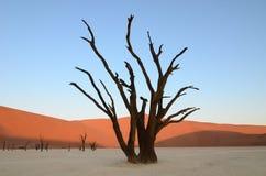 Dead Vlei in Namib desert. Namibia, Africa stock image