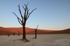 Dead Vlei in Namib desert. Namibia, Africa royalty free stock photography
