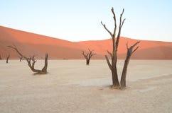 Dead Vlei in Namib desert. Namibia, Africa stock images
