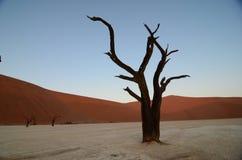 Dead Vlei in Namib desert. Namibia, Africa royalty free stock images
