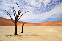 Dead Vlei,Namib Desert,Namibia Royalty Free Stock Photography