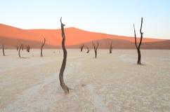Dead Vlei in Namib desert. Namibia, Africa royalty free stock photos