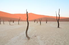 Dead Vlei in Namib desert. Namibia, Africa stock photo