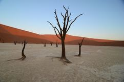 Dead Vlei in Namib desert. Namibia, Africa stock photos