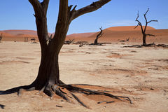 Dead Vlei. The Dead Vlei in the Namib Naukluft-national park in Namibia Stock Photo