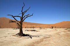 Dead Vlei. The Dead Vlei in the Namib Naukluft-national park in Namibia Royalty Free Stock Images