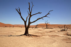 Dead Vlei. The Dead Vlei in the Namib Naukluft-national park in Namibia Royalty Free Stock Image