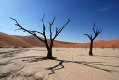 Dead Vlei Namibia Stock Photos
