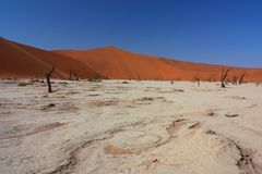 Dead vlei, Namibia Royalty Free Stock Photo