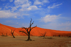 Dead Vlei - Namibia. Withered trees in the Dead Vlei surrounded by red sand dunes (Namib Naukluft National Park Stock Photo