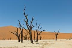 Dead vlei namibia. Death Vlei salt lake in Namibia Royalty Free Stock Photos