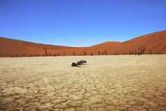 Dead vlei namibia. Death Vlei salt lake in Namibia with its cracked ground Stock Images