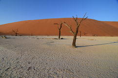 Dead Vlei, Namibia, Africa Stock Image