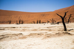 Dead vlei Namibia. Deadvlei is a white clay pan located near the more famous salt pan of Sossusvlei, inside the Namib-Naukluft Park in Namibia. Also written Royalty Free Stock Photo