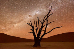 Dead Vlei, Namibia. Dead Vlei at dusk in the southern part of the Namib Desert, in the Namib-Naukluft National Park of Namibia Royalty Free Stock Photography