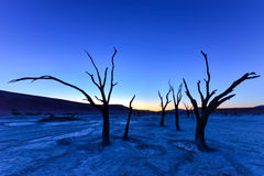Dead Vlei, Namibia. Dead Vlei at dusk in the southern part of the Namib Desert, in the Namib-Naukluft National Park of Namibia Royalty Free Stock Image