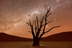 Dead Vlei, Namibia at Dusk. Dead Vlei at dusk in the southern part of the Namib Desert, in the Namib-Naukluft National Park of Namibia Stock Photos
