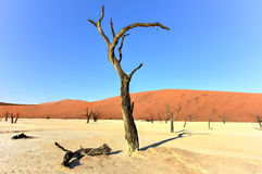 Dead Vlei, Namibia Royalty Free Stock Images