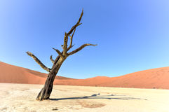 Dead Vlei, Namibia. Dead Vlei in the southern part of the Namib Desert, in the Namib-Naukluft National Park of Namibia Stock Photos