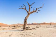 Dead Vlei near Sesriem in Namibia Stock Photography