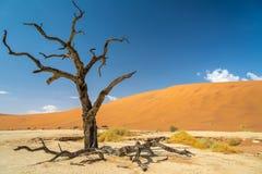 Dead vlei. Near to sossusvlei in the namib desert Stock Photography
