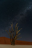 DeadVlei night sky Royalty Free Stock Images