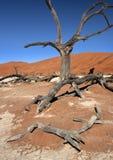 Dead Vlei salt pan - Namibia. Petrified tree at Dead Vlei salt pan near Sossusvlei in the Namib Desert in Namibia royalty free stock photos