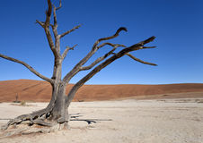 Dead Vlei salt pan - Namibia Stock Photo