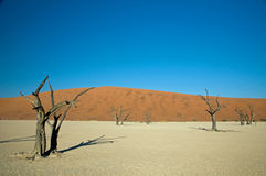Dead Vlei in Sossusvlei Stock Photo