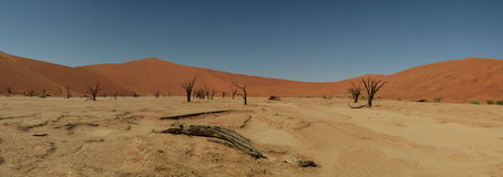 Dead vlei at sossusvlei Namibia Royalty Free Stock Images