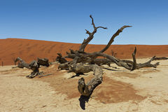Dead vlei tree namibia Stock Photo