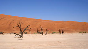 Dead Vlei trees in Namib desert Stock Image
