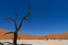 Dead Vlei Stock Photography