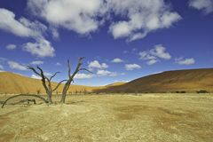 Dead Vlei Royalty Free Stock Photos