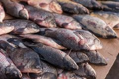 Dead wet fish lies in the market. Top down view on multiple rows of various raw freshly caught fish on ice for sale