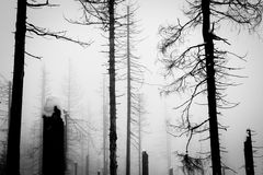 Dead winter forest. In Harz, Germany Royalty Free Stock Photo