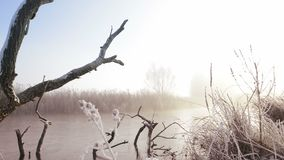 Dead Winter Tree stock video footage