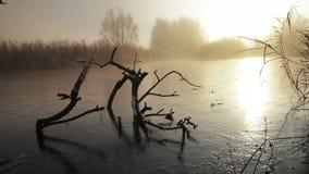 Dead Winter Tree stock footage