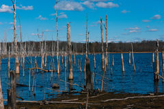 Dead Wood in Blue Water. Dead trees in the cold water of a reservoir in Autumn Stock Images