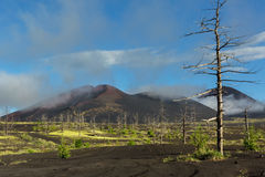 Dead wood - a consequence of a catastrophic release of ash during the eruption of the volcano in 1975 Tolbachik north. Breakthrough - Kamchatka Royalty Free Stock Photos
