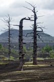 Dead Wood Dead Forest on Kamchatka Peninsula Royalty Free Stock Image